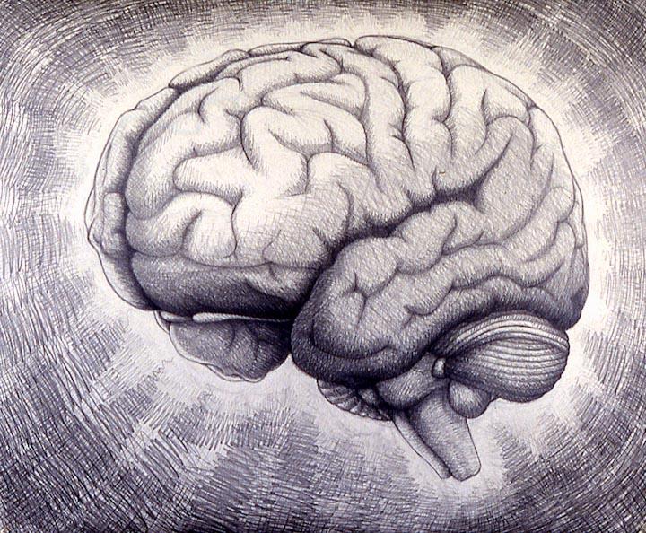 drawings_and_paintings-brains-brains01
