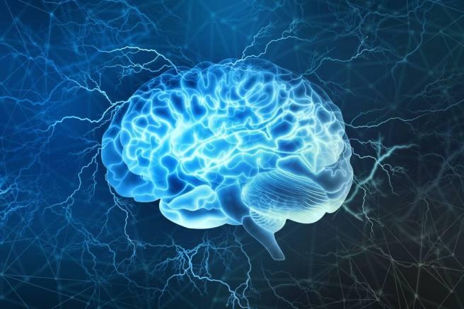 Brain5.jpg